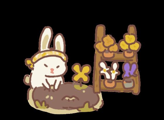 Bunny's Back Garden