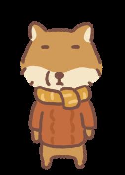 Mister Tibetan Fox